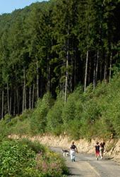 Duurzaamheid vurenhout